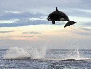 orca-02