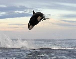 orca-03