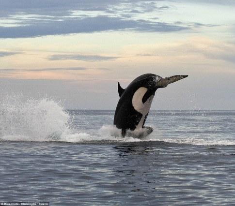 orca-04