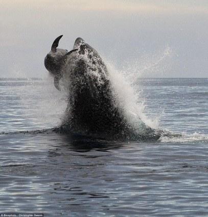 orca-05