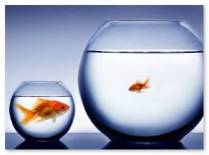 smallfish1
