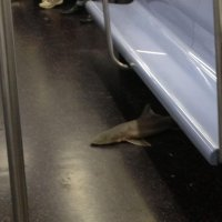 Sharks on a train