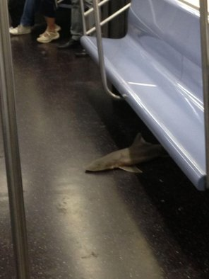 dead-shark-nyc1