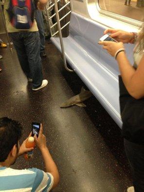 dead-shark-nyc2