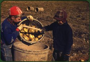 Children gathering potatoes on a large farm. Vicinity of Caribou, Aroostook County, Maine, October 1940. Reproduction from color slide. Photo by Jack Delano. Prints and Photographs Division, Library of Congress