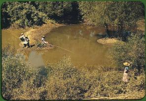 African Americans fishing in creek near cotton plantations. Belzoni, Mississippi, October 1939. Reproduction from color slide. Photo by Marion Post Wolcott. Prints and Photographs Division, Library of Congress